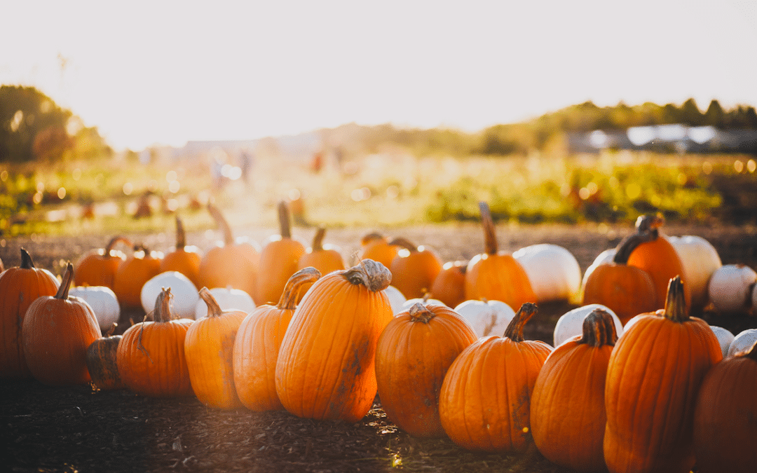 Fun Fall Events For Residents
