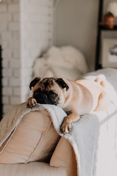 Benefits of a Pet Friendly Property